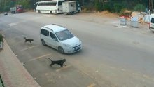 Bilerek köpeği ezip kaçtı