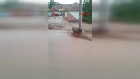 Sele kapılan 4 büyükbaş hayvan öldü