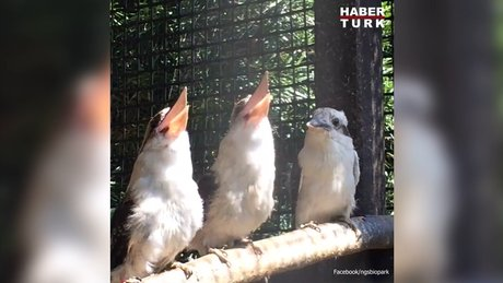 Arkadaşlarımın yaptığı espriyi anlamayan minik kuş