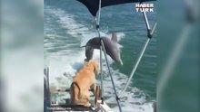 Yunus görünce heyecanlanan sevimli köpek