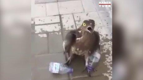 Bayılan kuşu suyla ayılttı