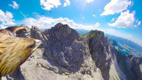 Kartalın gözünden Alp Dağlarını izleme keyfi