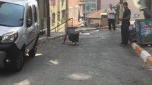 İstanbul'un göbeğinde bonzai krizi kamerada