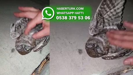 İstanbul Küçükçekmece'de 2 kişi yaralı baykuşa kalp masajı yaptı