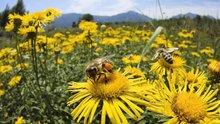 Arılar ve bal hakkında birbirinden ilginç 10 bilgi!