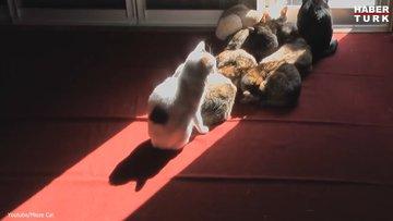 Suyu sevmeseler de güneş banyosuna bayılıyorlar
