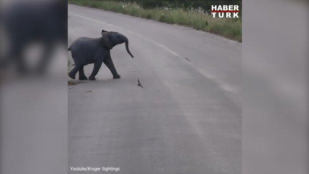Yavru filin eğlenceli anları