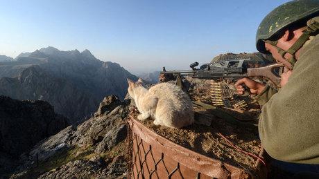 Mehmetçiğin can dostu kediler