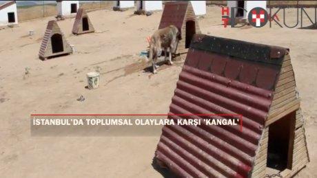 Polisin toplumsal olaylarda 'Kangal' köpeği olacak (Özel)