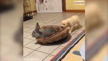 En tatlı yatak kavgası