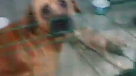 Hayvanları aç susuz rehabilitasyon merkezine kapattılar!