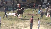 Sultangazi'de kızgın boğa 10 kişinin elinden böyle kaçtı