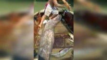 Adana'da dev yayın balığı yakalandı
