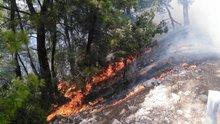Muğla'nın Menteşe İlçesinde orman yangını