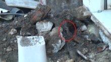 İstiklal Caddesini fareler bastı