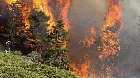 Kütahya'daki orman yangını tekrar başladı