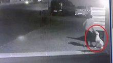 Köpek hırsızı kamerada