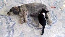 Terk edilen yavru kediye annelik yapan köpek