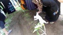 Sahibinin mezarını kazmaya çalışan kedi