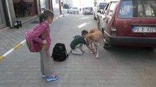 Karaman'da yaralı köpeğe çocuk şefkati