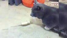 Kediden kurtulmak için ölü taklidi yapan fare
