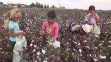 Yaşıtları okulda, onlar pamuk tarlasında çalışıyor
