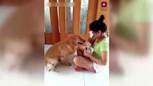 Ağlayınca mendil getiren dünyanın en merhametli köpeği