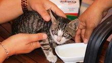 Antalya'da mahsur kalan yavru kedi, cep telefonundaki kedi sesi sayesinde kurtarıldı