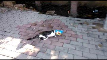 Kafasına cips poşeti geçiren kediyi vatandaş kurtardı