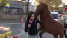 Sarıyer'de başıboş at muhabire saldırdı!