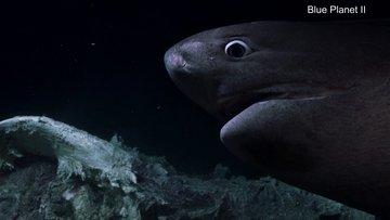 Köpek balıkları BBC'nin belgesel denizaltısına saldırdı