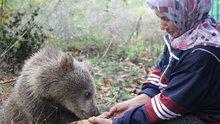 Yavru ayıları ballı ekmekle besliyor!
