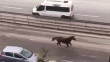 E-5'te dört nala koşan at şaşkınlığı kamerada