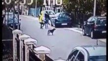 Kapkaççıyı durduran cesur köpek kamerada!