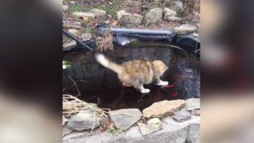 Bu Kedi balık tutmaya kararlı!