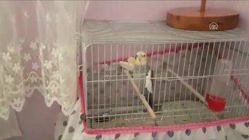 Sultan papağanından