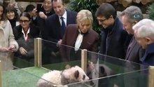 Yavru panda, Brigitte Macron'a saldırdı