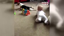 Bebeğe nasıl gezileceğini gösteren şirin köpek