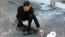 Jandarmadan örnek hayvan sevgisi