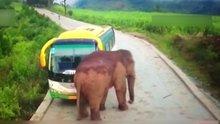 Çin'de iki araca fil saldırısı