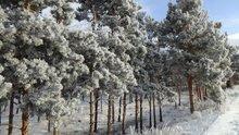 Erzurum eksi 8 derecede Sibirya soğuklarını yaşıyor