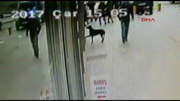 Marketin camına patisiyle vurup yemek bekleyen köpek
