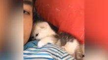 Daha fazla ilgi bekleyen kedi yavrusu