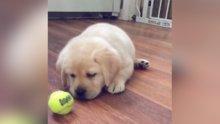 Oyun oynamayı bekleyen sevimli köpek