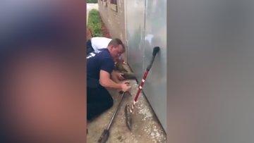 Kapıya sıkışan kedi böyle kurtarıldı