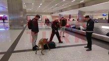 Hollandalı yolculara köpekli arama