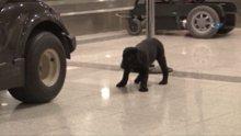 Havaalanında unutulan köpek