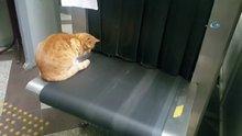 Bursa Adliyesi'nde bir kedi X-ray cihazından geçmeye çalıştı