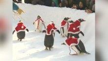 Penguenlerin yeni yıl kutlamaları
