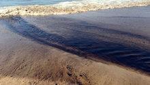 Mavi bayraklı plajda atık petrol atığı tepkisi